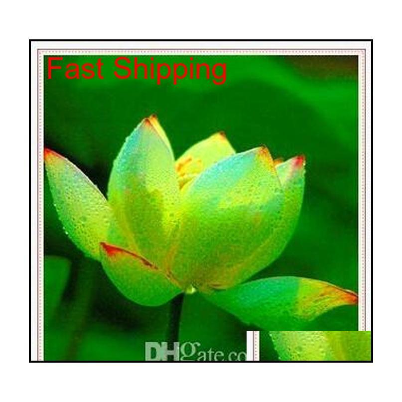 Promotion ! 10 pcs pas cher eau de lys graines de lys coloré bonsaï balcon fleur bol lotus plante aquatique pérenne QYLAGC homes2007