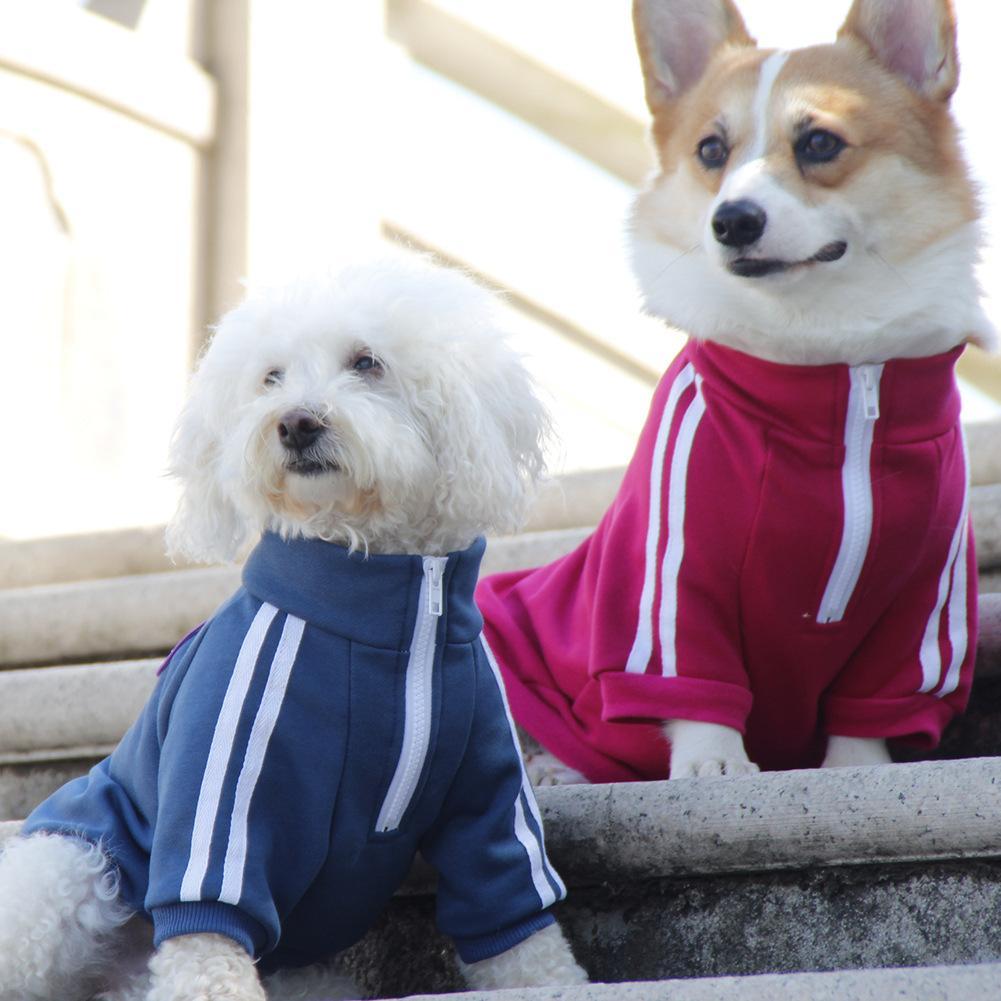 PET IT CAMPUS estilo mascota ropa deportiva nostálgica teddy corgi perro suéter primavera y ropa de otoño