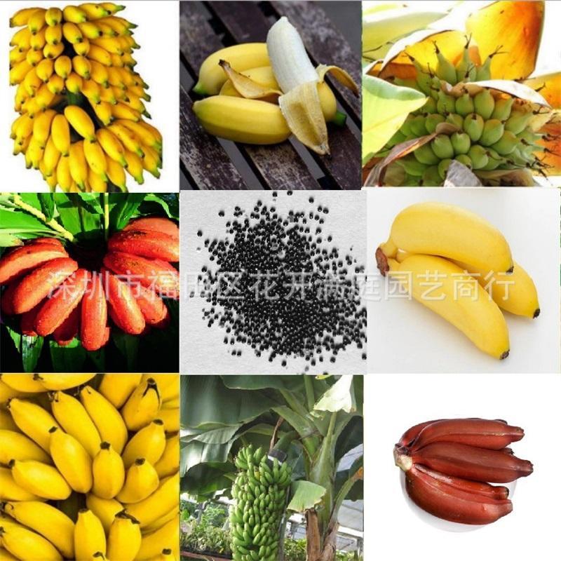 1set / 100 pcs Rare Anão Banana Tree Bulk Sementes Mini Bonsai Frutas Tropicais Pastos Plantas 477 S2