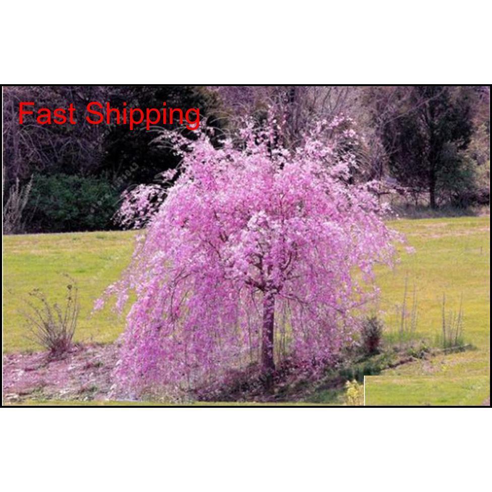 10 قطع مختلطة اليابانية بونساي ساكورا بذور شجرة البكاء شجرة الكرز diy حديقة المنزل قزم sak qyliom sports2010