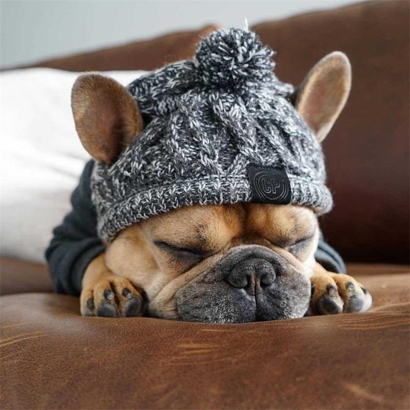 가을과 겨울 모피 공은 따뜻하고 방풍 퍼프 볼 뜨개질 방법 개 싸움 모자 뜨거운 새로운 애완 동물 headgear 107 v2