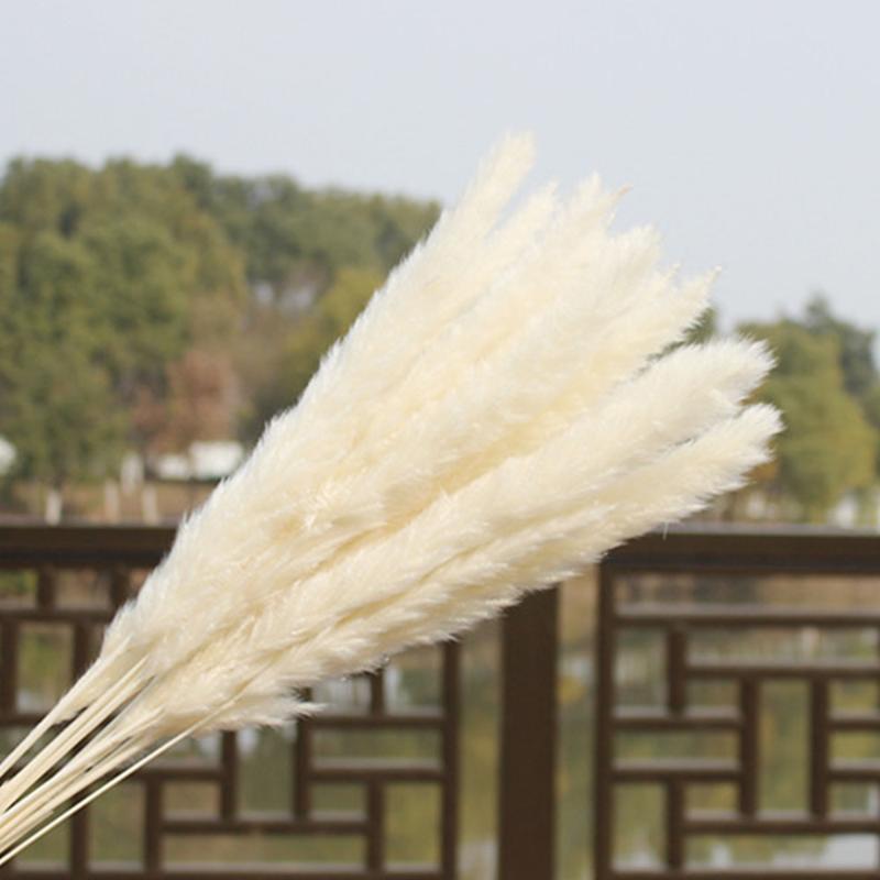 الأسهم الأمريكية 30 قطع المجففة الطبيعية بامب العشب ريد الزفاف المنزل زهرة حفنة ديكور الزهور المجففة في الهواء الطلق ديكور الوردي