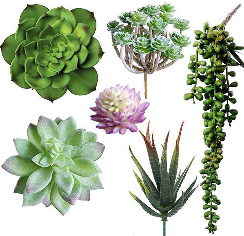 6 PCS 인공 즙이 많은 다른 종류의 모듬 된 가짜 즙이 많은 식물 꽃꽂이 가정 장식을 위해 싫어