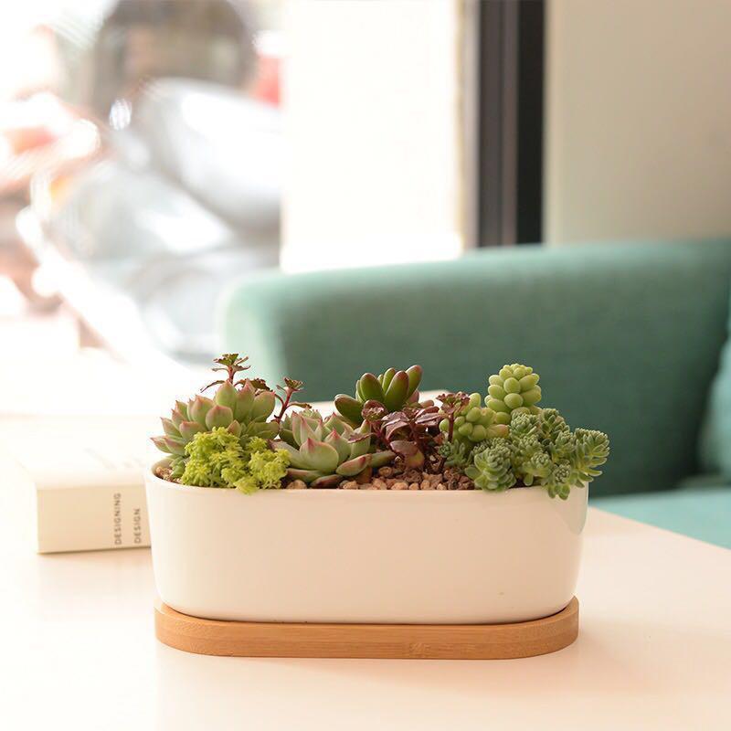 Weiße Porzellan Sukkulenten Topf Grüne Pflanzen Blumentopf mit Bambusschale Kreative Büro Tischplatte Pflanzgefäß Konzise Vase Wohnkultur