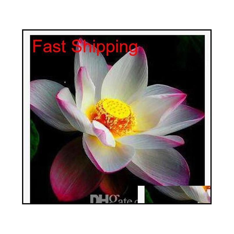 ¡Promoción! 10 unids barato agua lirio semillas colorido bonsai balcón flor tazón loto perenne aquic pl qylbwb dh_seller2010