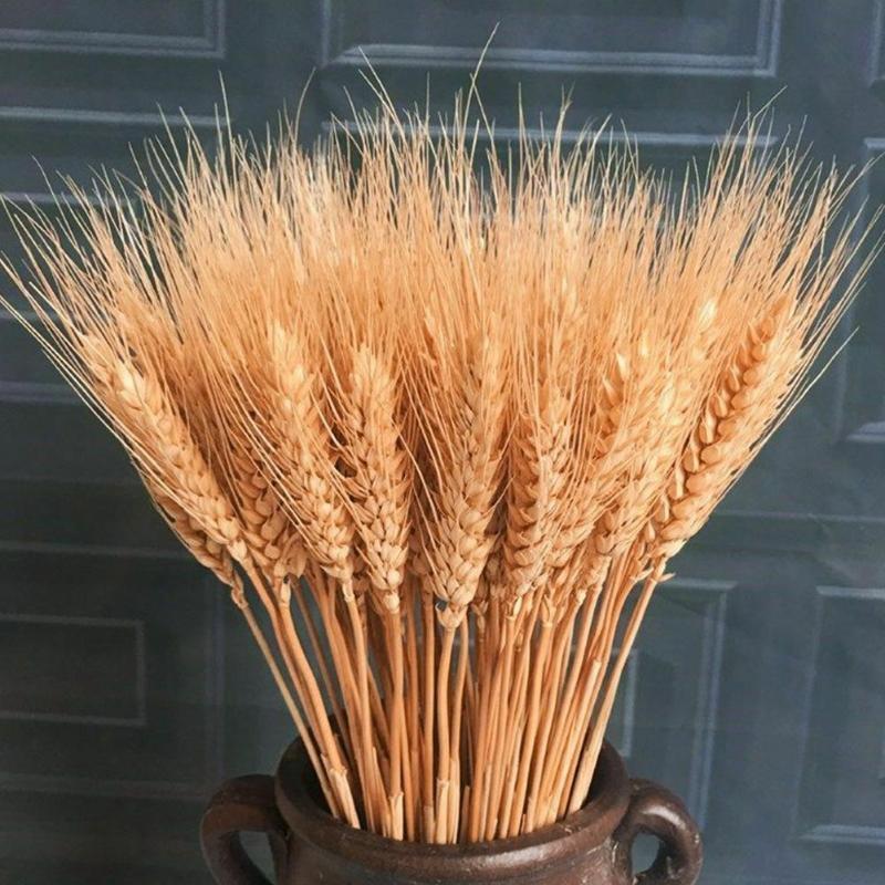 25 палочек из пшеницы натуральные декоративные высушенные цветы высушенные цветочные букет из гостиной украшения свадьбы дома