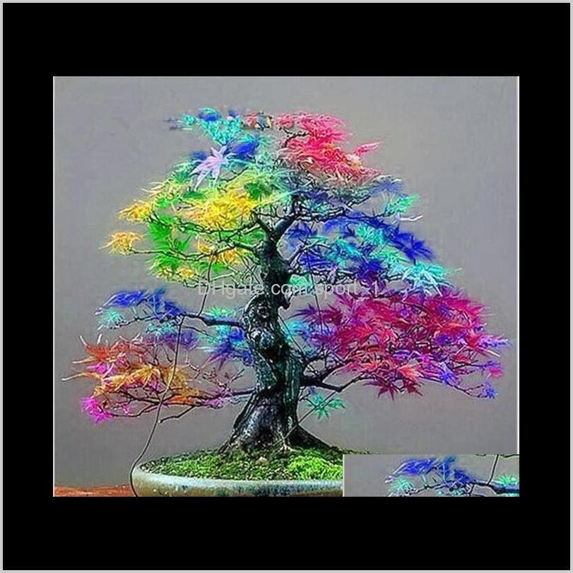 100% genuino 30 piezas / bolsas semillas multicolor arce bonsai árbol planta flor japonesa mini arce árbol Planta para el patio Home Garden Cl ZDX0L