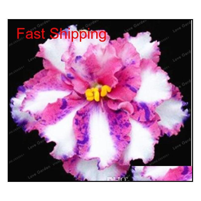 100 pcs / sac graines violetes africaines SaintPaulia ionantha belle plante bonsaï belle fleur bricolage h qylmwr toys2010