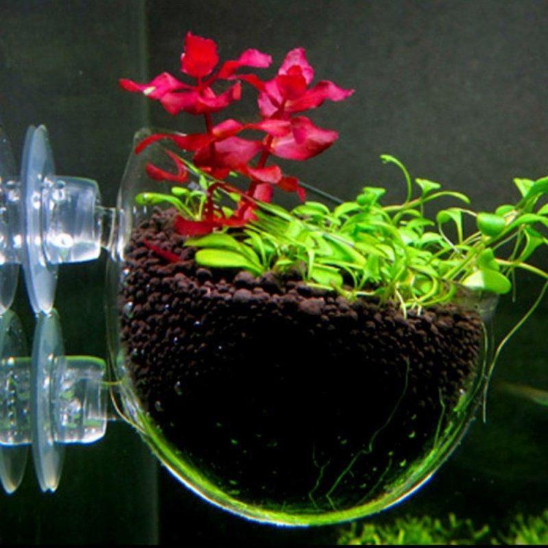 Оформления культивирования аквариумных рыбных аквариумов мини кристалл стеклянный горшок водяной горшок водный водный посадка цилиндр чашка висит завод