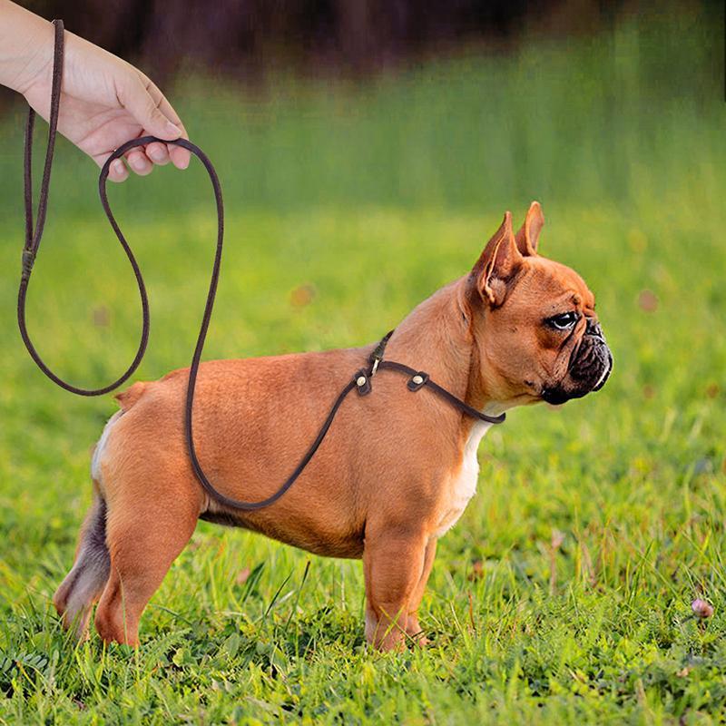 Colares Cachus Lashes Ultra-fino VIP Teddy Leash Couro Pet Soft Copper Gancho 5mm de largura pode ser usado como p-cadeia