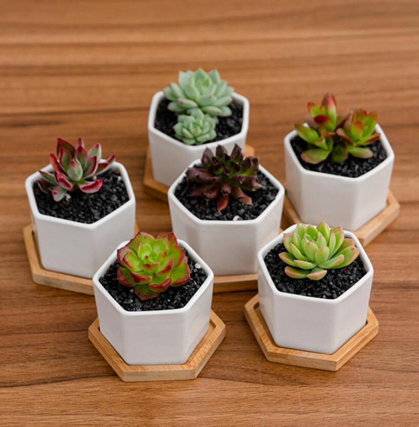 Keramische Bonsai-Töpfe Miniweiß-Porzellan-Blumentopfer sukkulenter Garten Indoor Home Kindergarten-Pflanzgefäße mit Chassis Cyz3125