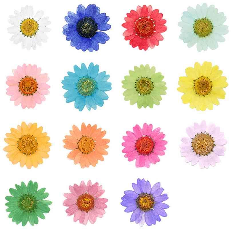 360pcs Pressed Press Dried Daisy Dry Flower Plants For Epoxy Resin Pendant Necklace Jewelry Making Craft DIY Accessories 210911