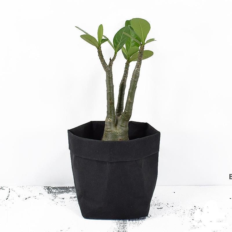 Складные горшки Kraft Paper Picketpot Водонепроницаемые 4 Цвета Защита окружающей среды Защита Защита Сумка для хранения Мини Садовый Овощной Чехол DHE7014