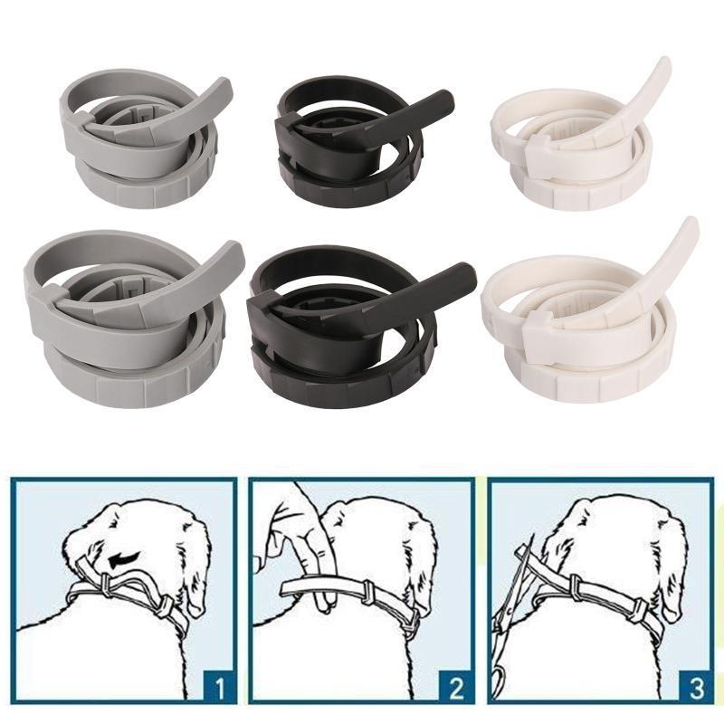 Colares Colares Leashes Cat Flea Tick Prevenção Collar Prevenção 8 Mês Proteção Natural Ajustável