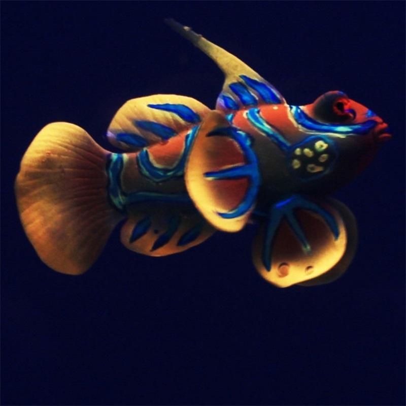 Silicone Aquarium Frog Fish Decoration Pesce artificiale incandescente Green Acuario Decor Abbastanza carino Micro ornamento per serbatoio 325 R2