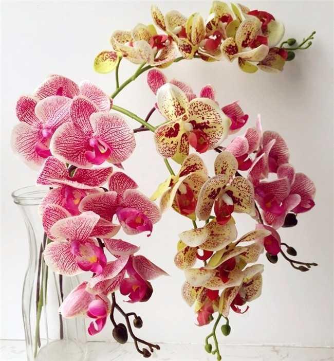 Bir Gerçek Dokunuş Orkide Kelebek Phalaenopsis Beyaz / Fuşya / Pembe / Sarı Yapay Lateks Orkide Çiçekler Düğün Dekorasyon Için T191029