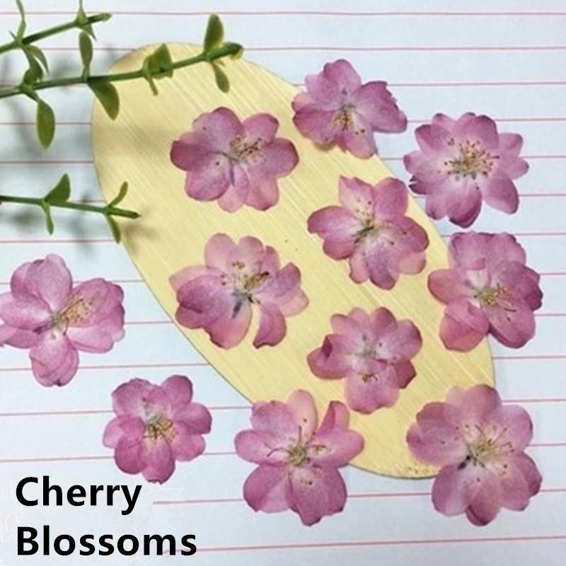 Romance Cherry Fleur de fleur pressé Matériaux de bougie à fleurs séchées pour bricolage Bookmark Fleurs décoratives Couronnes