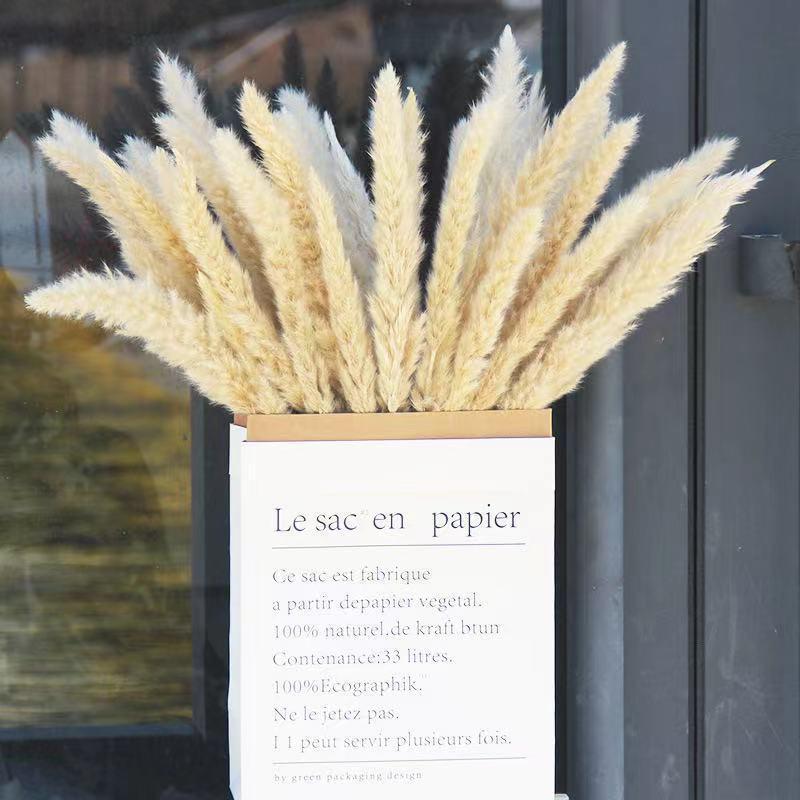 50 adet Kurutulmuş Küçük Pampas Çim Reeds Çiçekler Pantas Yapay Para Decoracion Gerçek Bitkiler Ev Dekor Düğün Dekorasyon