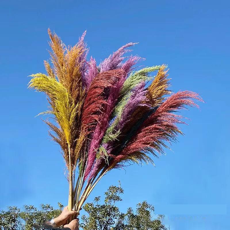 130 cm Pampas Çim Doğal Bitkiler Kurutulmuş Çiçek Reed Ev Dekorasyon Sevgililer Günü Hediyesi Düğün Çok Renkli Renk Buket