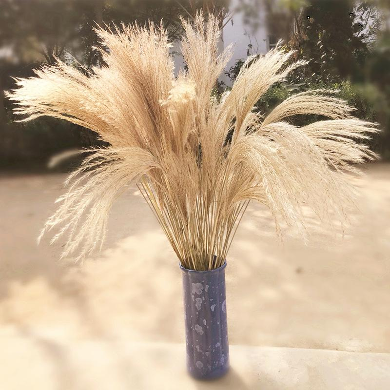 Natural Secado Flor Reed Home Accesorios Inmortal Flores Ear Of Trigo Moda Moda Ventana Boda 0 39YZ K2 0D5P