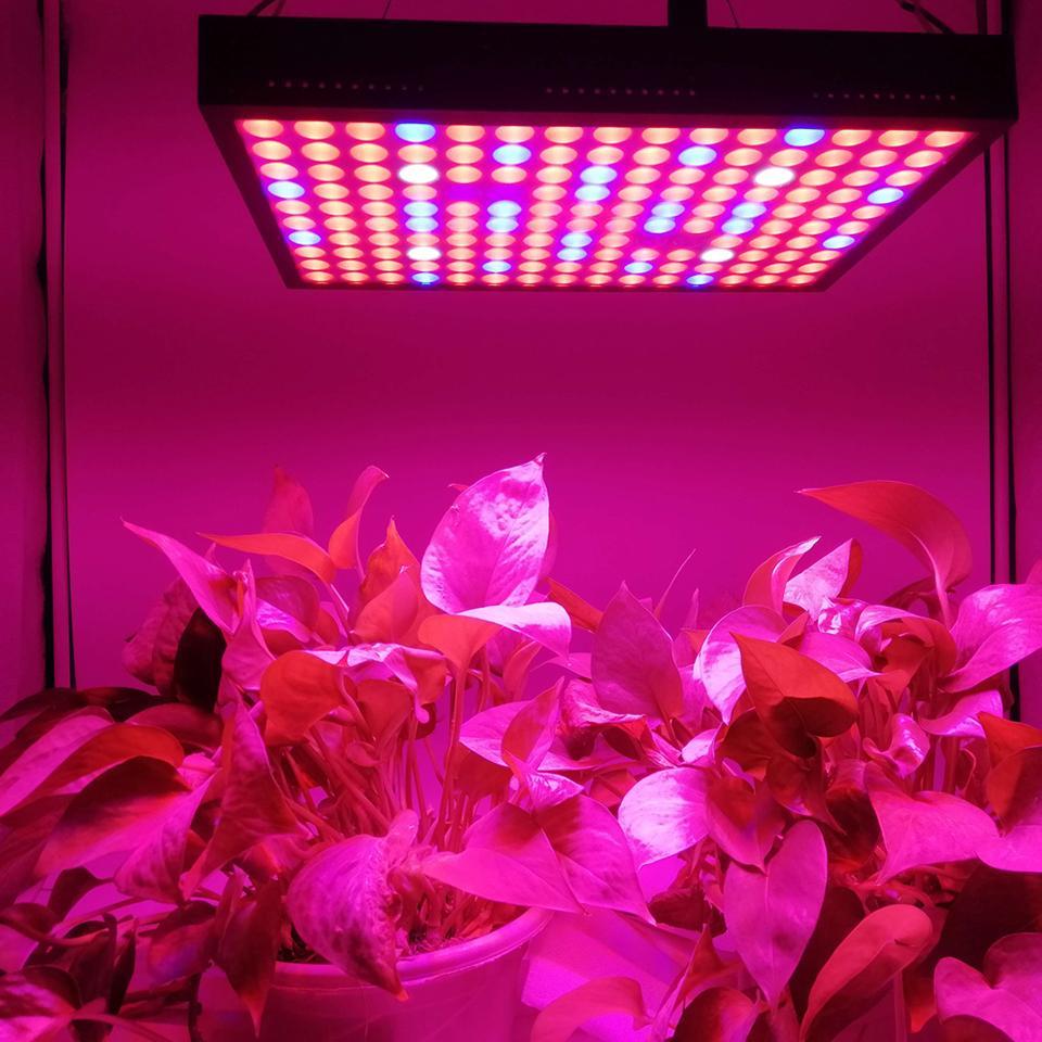 600W SMD 3030 Chips LED Cultiver le spectre complet de lumière rouge / bleu / blanc / UV / IR 410-730nm pour plantes intérieures et expression de fleur Tente de serre