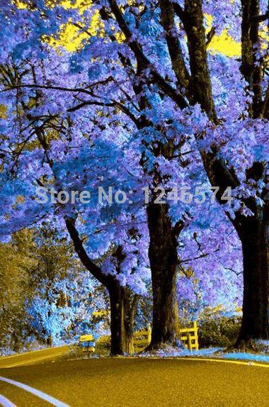 100 graines de Paulownia (arbre de princesse ou d'impératrice) - impressionnant et ajoutent de la beauté à votre gard