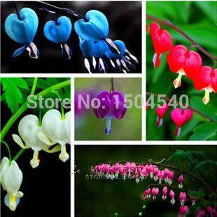 Продвижение 100 Dicentra Spectabilis семена кровотечение сердце классический коттедж сад растений, в форме сердца цветы, папоротник листья