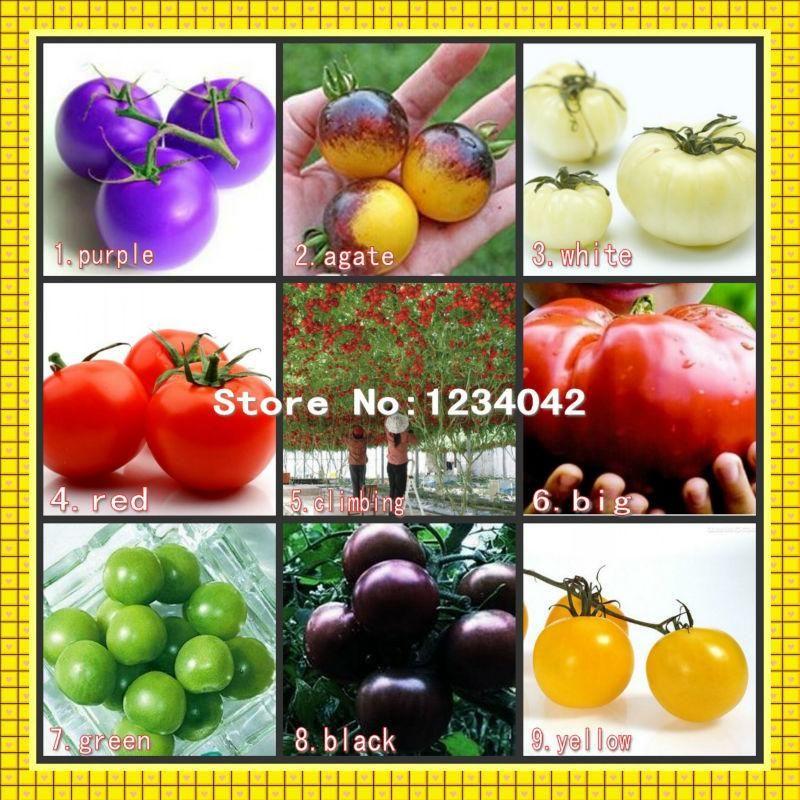 2020 200 Bag Climbing Tomato Bonsai Edible Tomato Plants Tomato Vegetable Non Gmo Food Pot Home Garden Plant From Beauty Diary 4 15 Dhgate Com