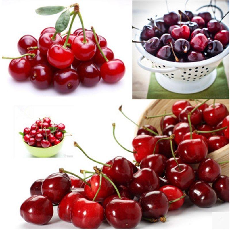 Nouvelle arrivée 10pcs délicieux cerise mazzard cerise Prunus avium graines de fruits frais