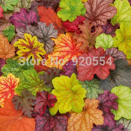 Семя Heuchera 10pcs / lot, коралл цветка, цвет сада листьев bonsai листьев коралловых колоколов цветастый освобождает перевозку груза