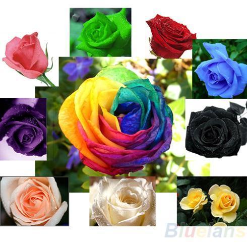 20 pz / pacco Semi di Rosa Blu Rosso Viola Rosa Nero Arcobaleno Petalo Piante Giardino di Casa Fiori Bonsai 04LH