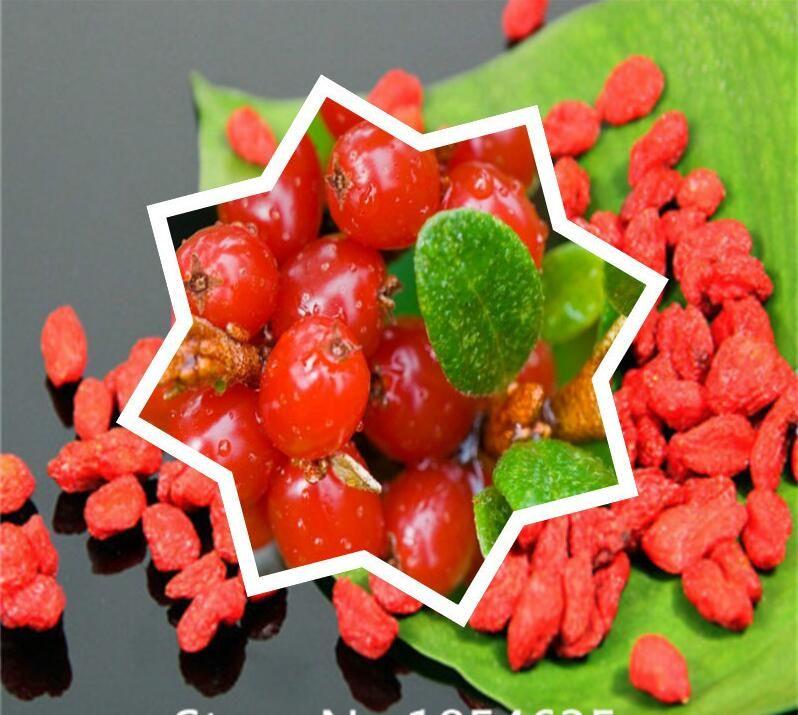 2020 Garden Plant Goji Berry Seeds Organic Non Gmo Goji Wolfberry