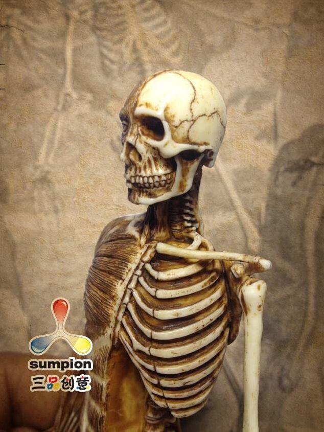 Human Anatomy Skeleton Anatomical Model For Sale Skull19cm Height Pu ...