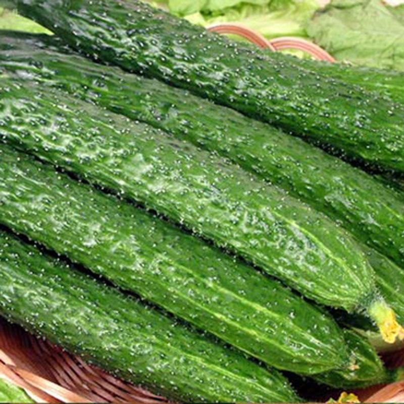 Free shipping Vegetables fruits and seeds skgs jade cucumber fruits and vegetables balcony bonsai