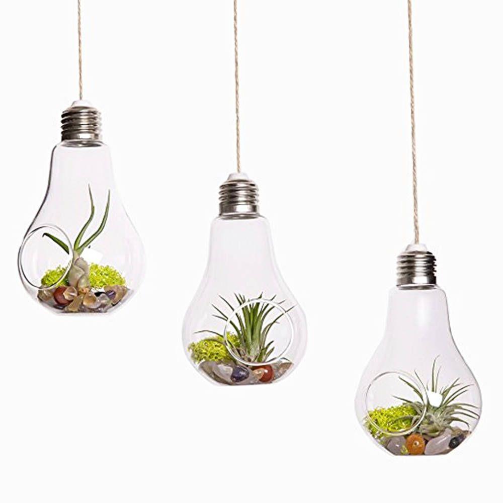 Terrario Per Piante Grasse acquista confezione da 3 lampadari in vetro terrari, piante in sospensione,  fioriere piante grasse piante da giardino a 5,41 € dal championcrafts |
