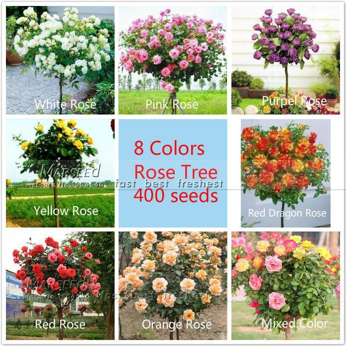 400 семена 8 цветов китайские семена розового дерева 50 семена / цвет, ароматические приятный запах ароматный, идеальный DIY дома бонсай цветок