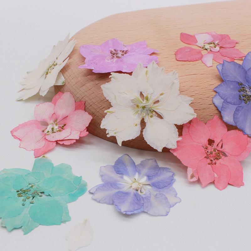 250pcs 2-4cm Presionado Consolida Ajacis Flor Planta Herbario para joyería Postal Tarjeta de invitación Teléfono Estuche Bookmark DIY