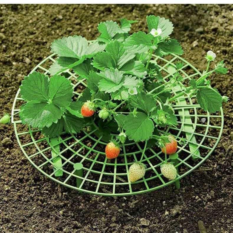 딸기를 지원하는 딸기 프레임 프레임 홀더 냄비 심기 랙 과일 지원 공장 꽃 등반 포도 나무 기둥