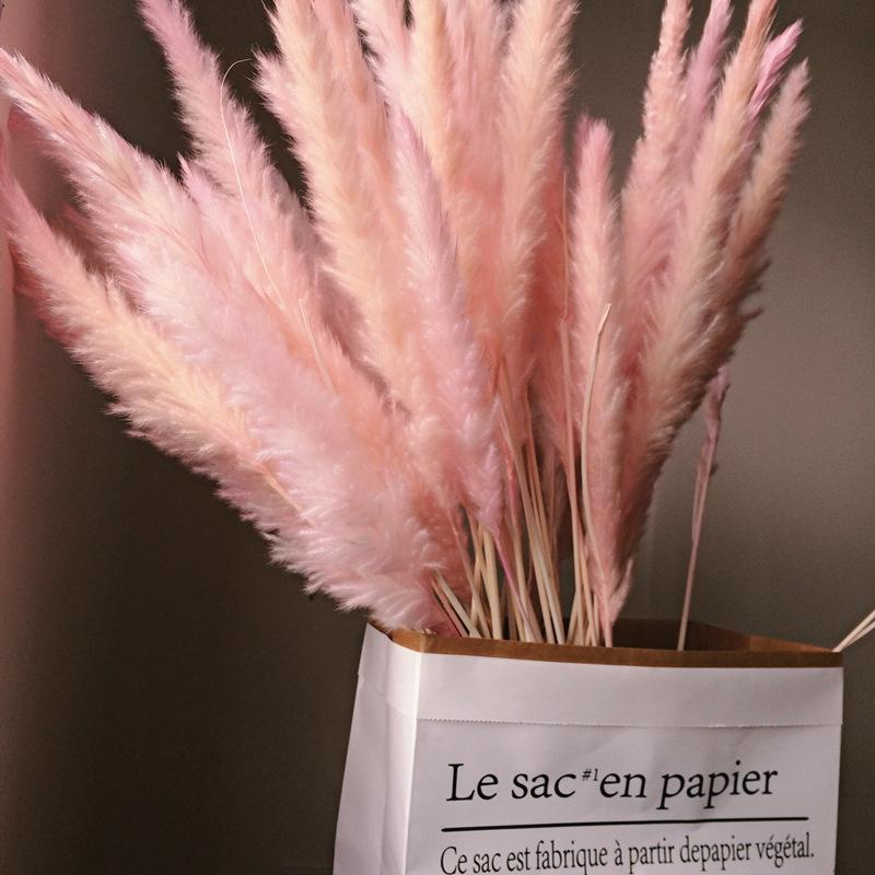 Natural Bulrush Dried Flowers Small Pampas Grass Phragmites Artificial Plants Wedding Flower Bunch Home Decor Fake Flowers 1254 V2