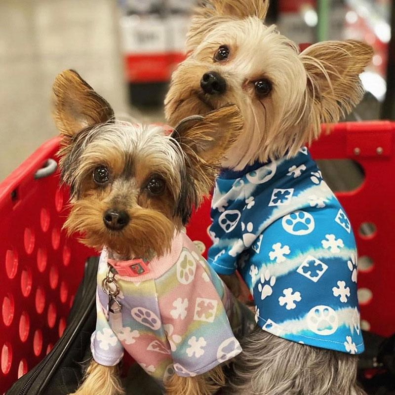 Designer de luxo francês animal de estimação cão vestuário verão camiseta curta seção fina de algodão teddy gato dois pernas desgaste para roupas médias roupas pequenas roupas