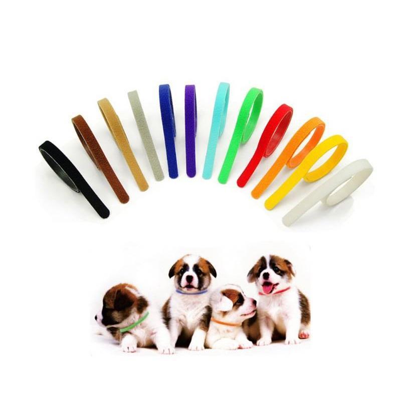 Collari del colletto del cucciolo ID Collari Band per Whelp Kitten Dog Pet Cat Velvet Pratico 12 Colori 41 H1