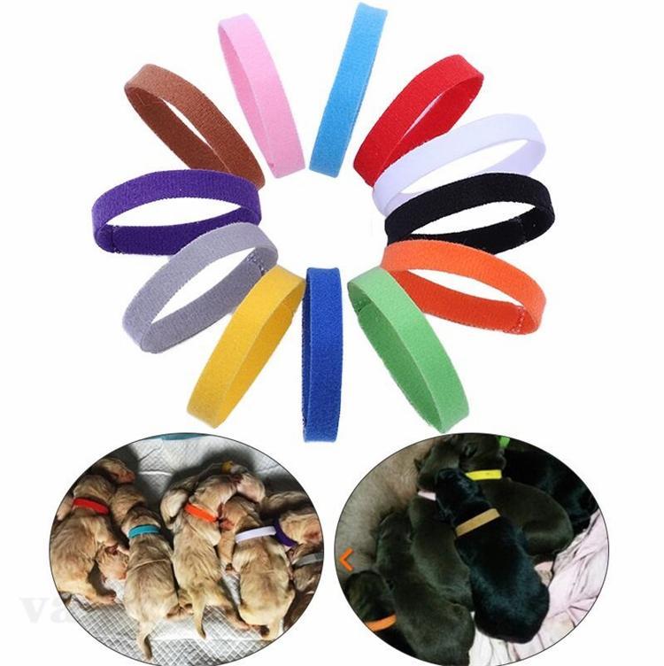 Welpen-ID-Kragen-Identifikation Hundehalsbänder-Band für Whelp-Puppenkätzchen-Hunde Pet Katze-Samt-Praktische Halsbänder12 Farben ZC180