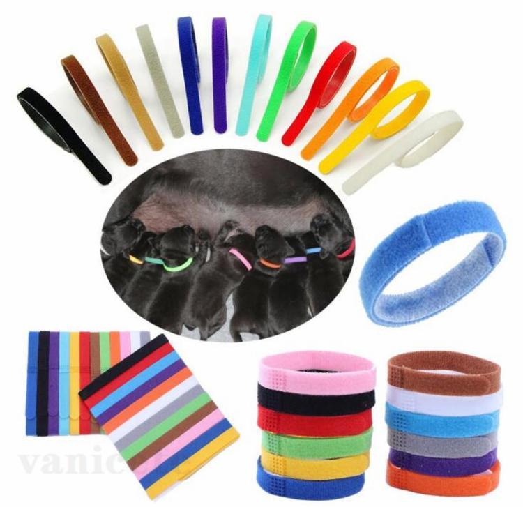 PUPPYS ID Collare Identificazione Dog Collars Band For Whelp Puppy Kitten Pet Cat Velvet Collari pratici12 Colori ZC180