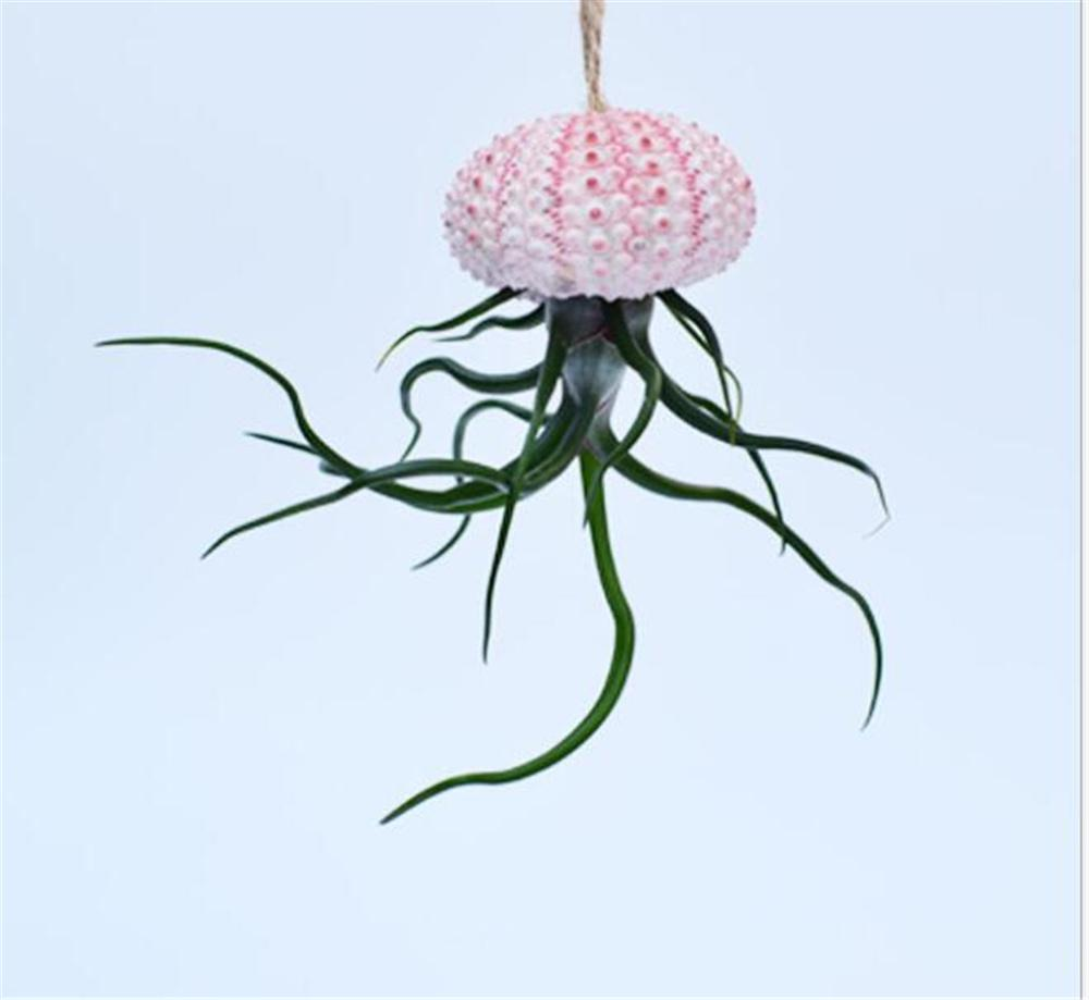 Factory Decorations Air Plants Holders Natural Sea urchin Shell Wall Hanger Handmade Rope Hanging Plant with Ropes for Home Decoration
