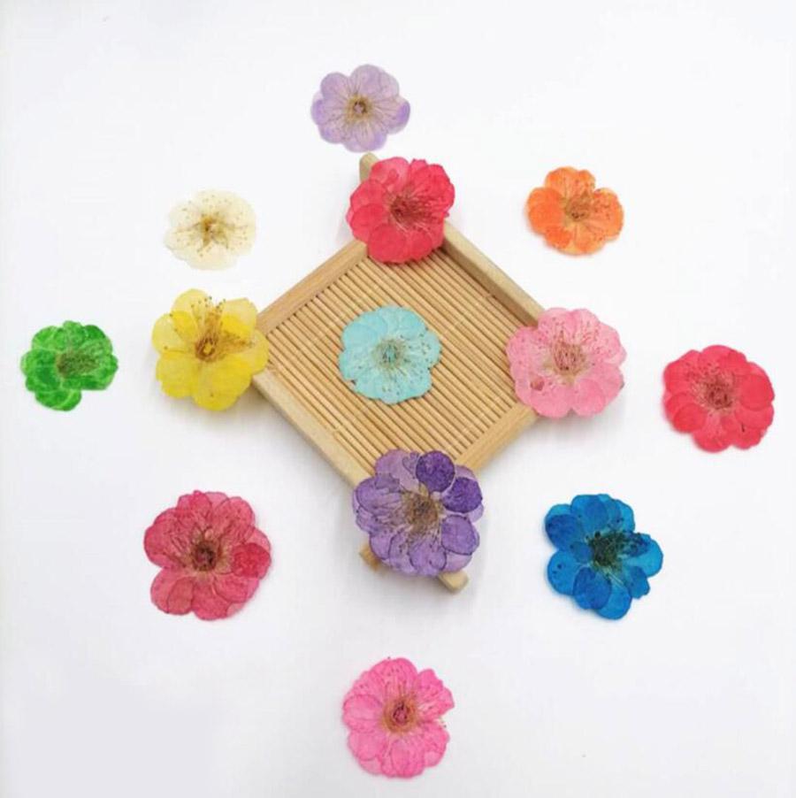 250 unids prensado seco plum flor flores plantas herbario para joyería iphone teléfono estuche marcador marco de fotos haciendo accesorios