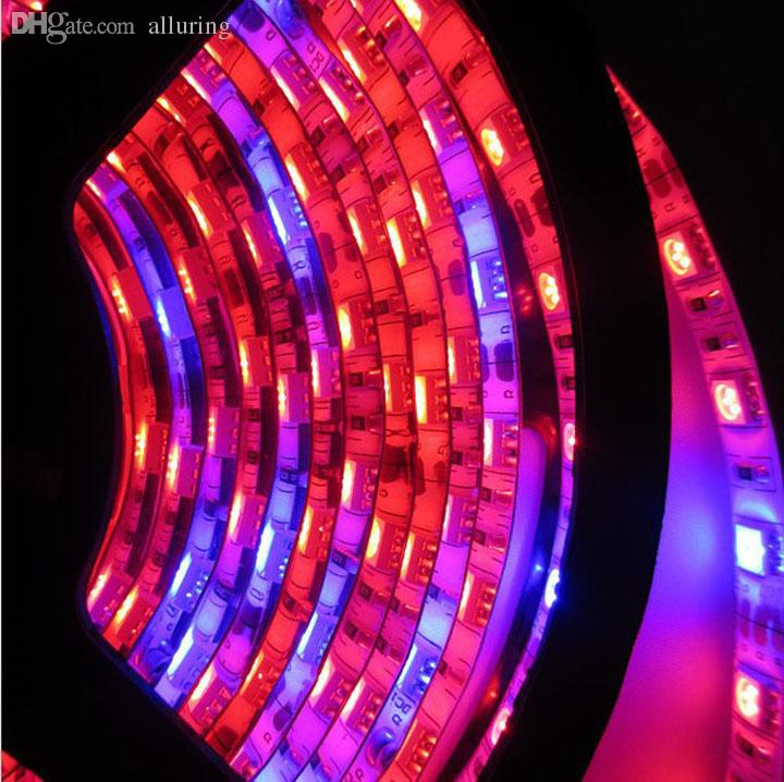 Wholesale-Free Shipping 5m 5050 LED grow light Strip growlight 12V Red Blue Waterproof For Greenhouse Hydroponic plant growing lamp