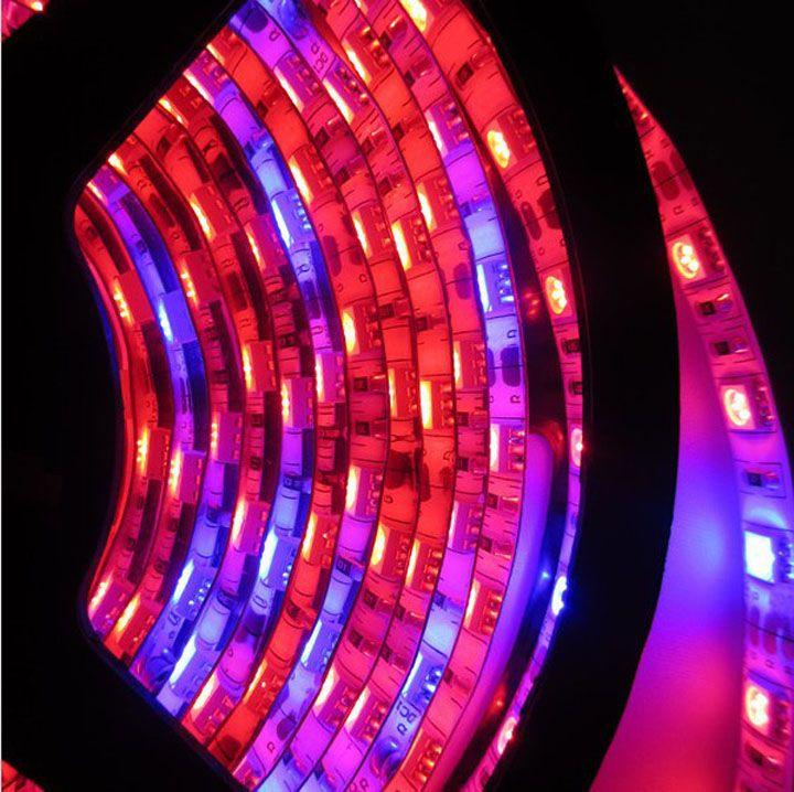Atacado-Free Shipping 5m 5050 LED crescer luz tira growlight 12V vermelho azul impermeável para estufa hidropônica planta crescente lâmpada