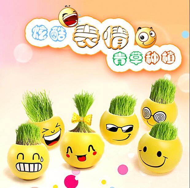 QQ التعبير مصغرة النباتات السحرية العشب زرع بونساي الأخضر النباتات بوعاء هدية بذور زهرة 111 جرام 6.5 سم CYB58