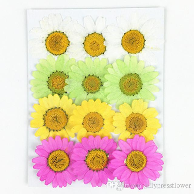 Decorative Flowers Combination Medium Chrysanthemum Dried Flower Painting 5 Different Style For Pendant Decoration Free Shipment 120Pcs