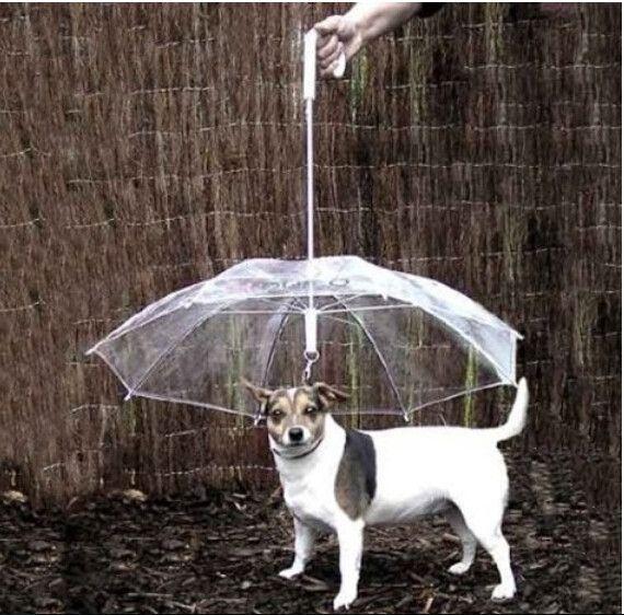 بارد مستلزمات الحيوانات الأليفة مفيدة شفافة PE الحيوانات الأليفة مظلة كلب صغير مظلة المطر والعتاد مع يؤدي الكلب وتبقي الحيوانات الأليفة الجافة مريحة في المطر